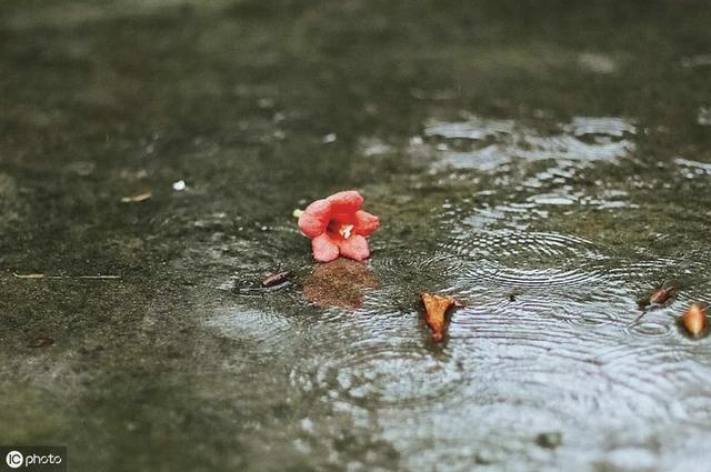 中考辅导:三步读懂徐再思的《水仙子 夜雨》,轻松答题